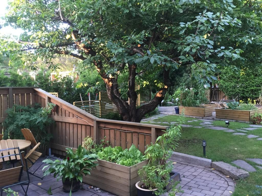 Det är en helt ny trädgård och solen orkar ända fram till stammen