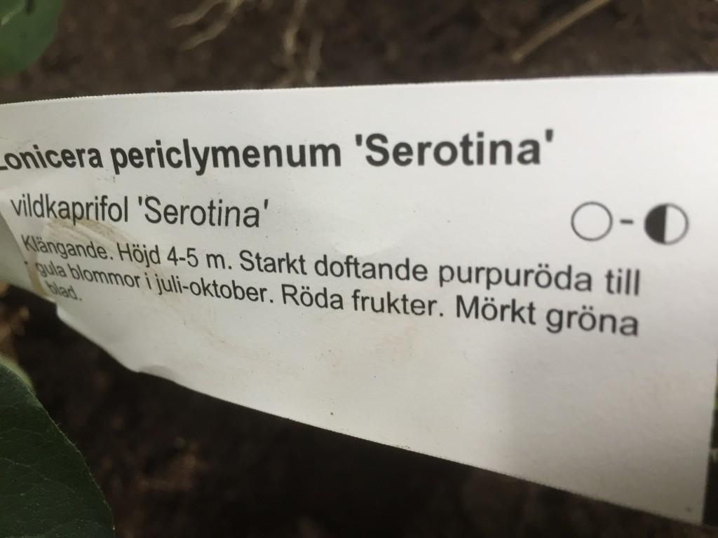 Vildkaprifol Serotina Skötselråd