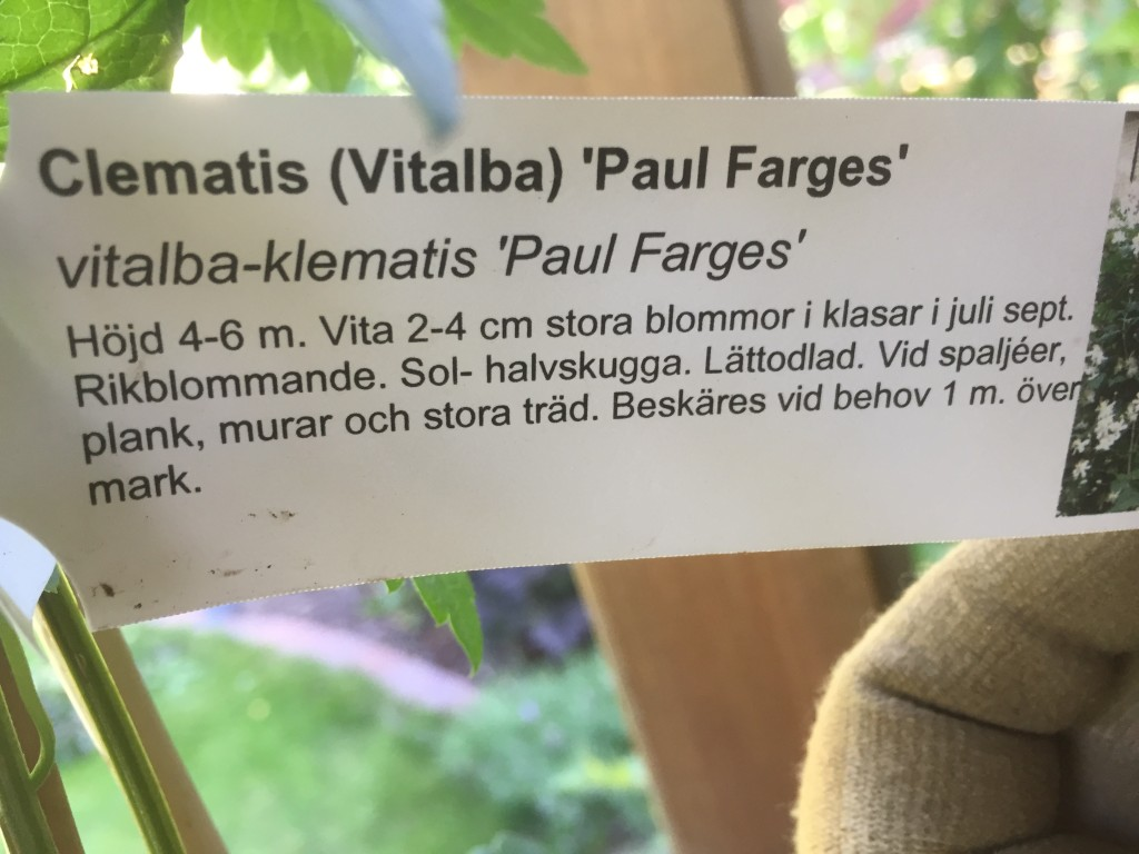 Paul Farges (vitalba) Skötselråd