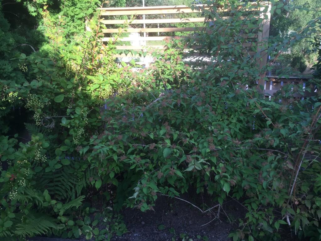 Och här är de planterade